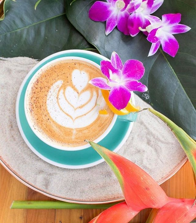 I present to you, my favorite coffee shop these days: @provisioncoffee. Their presentation is always on point, coffee, delicious, and customer service, genuine, which I always appreciate. I love their big windows, spacious patio, and rotating seasonal menu offerings. This beautiful summer drink is the Tahitian Latte: •espresso •coconut almond cream •milk •vanilla •orange @scrappybitters •Garnish: orange twirl and fresh nutmeg 📷 @croenburger I'm sometimes here on Thursday mornings, but really want to come for happy hour one of these days, because their cocktails look amazing too!  Are any of you fellow Provision regulars? Or about to be? 😉 #flythenest🌵 #phoenixcoffee #tinyhouserental #airbnbhosts #visitphoenix