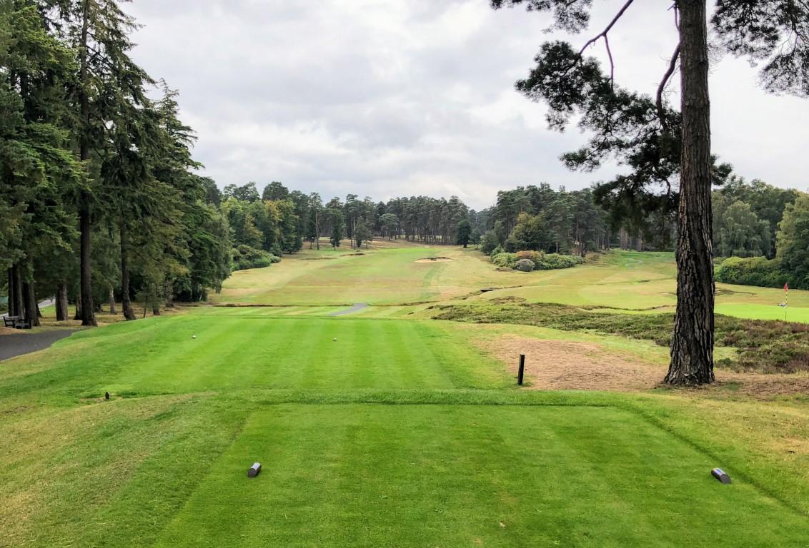 Swinley Forest (5).jpg