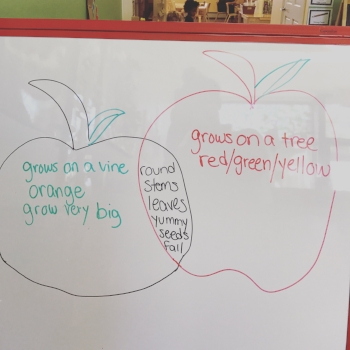 Comparing pumpkins to apples, who knew there were so many similarities? Our preschoolers did!