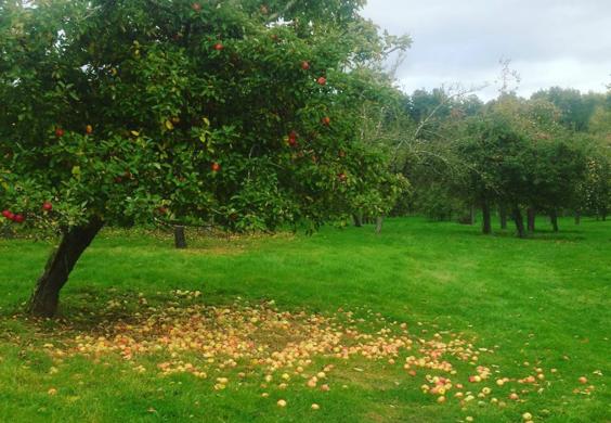 old orchard.jpg