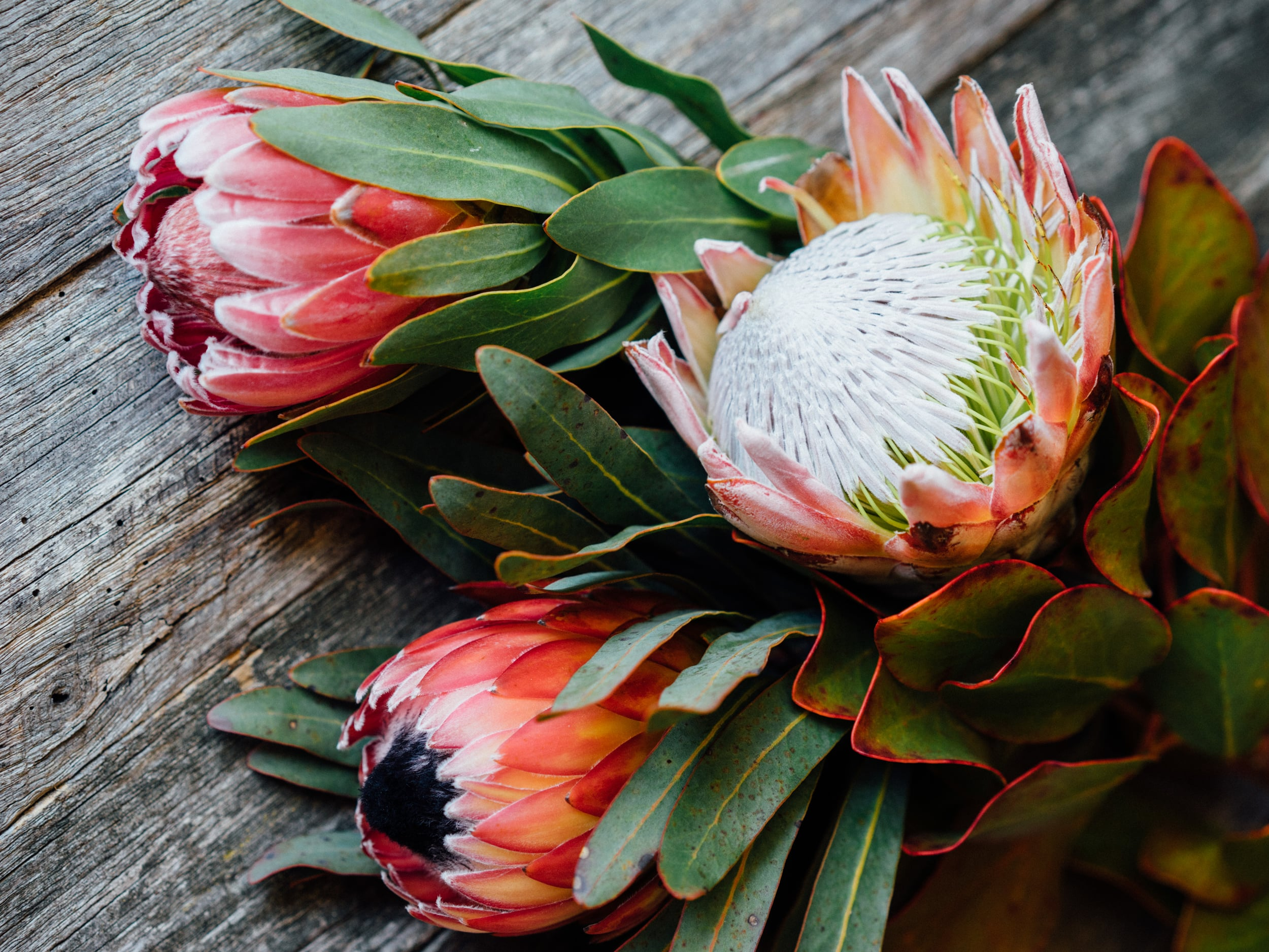 Commercial photo of flowers