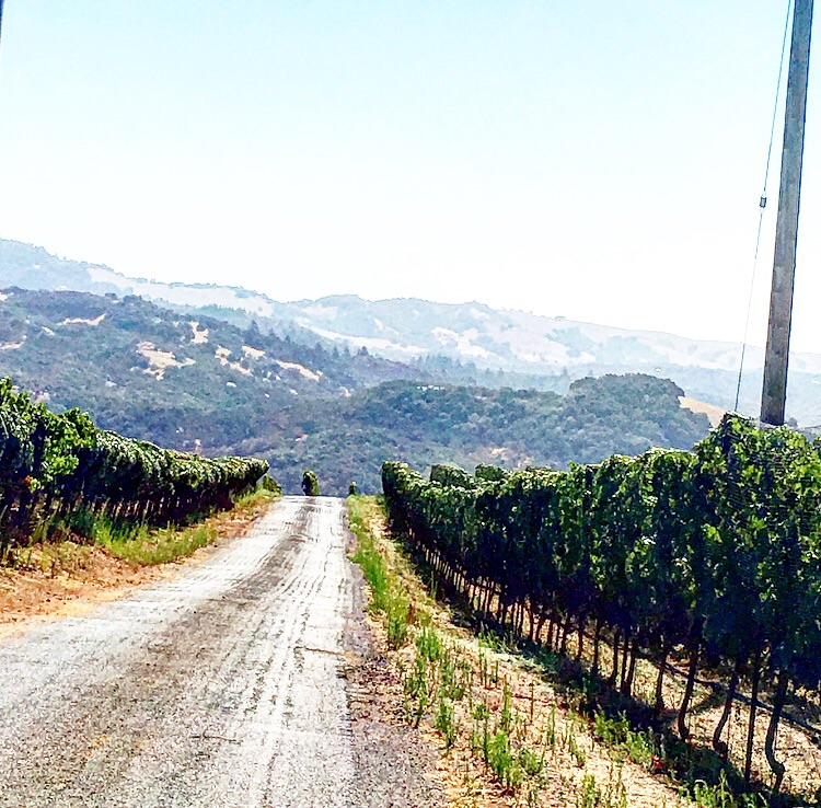 On the drive up to the vineyards
