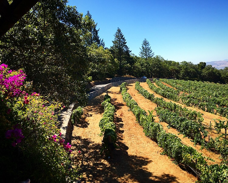 The Hanzell property is a combination of beautiful gardens, manicured vineyards and wilderness, all together in harmony!