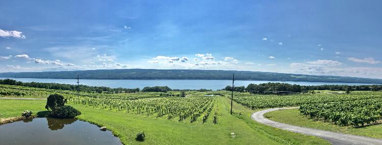 Vineyards overlooking Beautiful Seneca Lake in New York's Finger Lakes Region. Photo by Lisa Denning