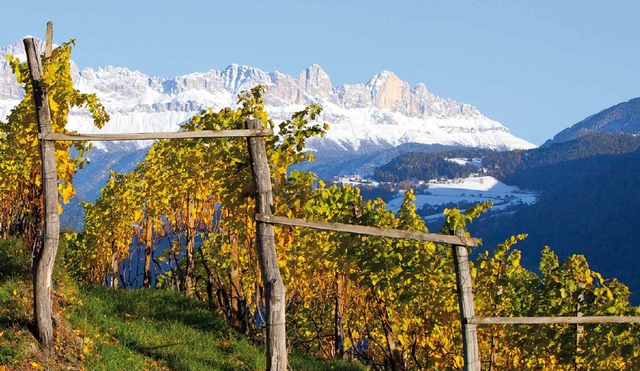 Photo courtesy of  Wine And Travel Italy