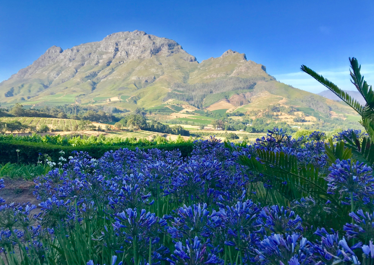 The beautiful landscape of the South African winelands with its magnificent mountain ranges.