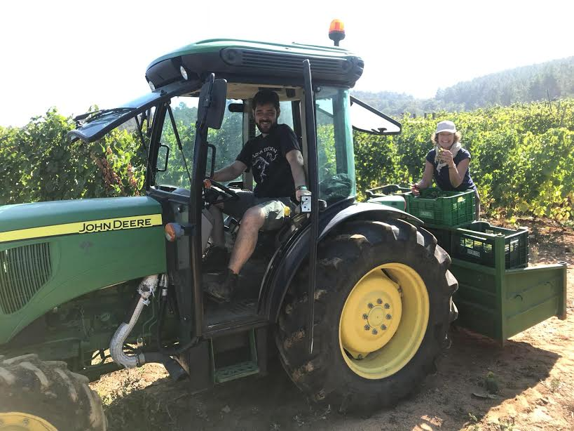 April at the back of the tractor, checking on her grapes. Ivan, the viticulturist, is at the wheel.
