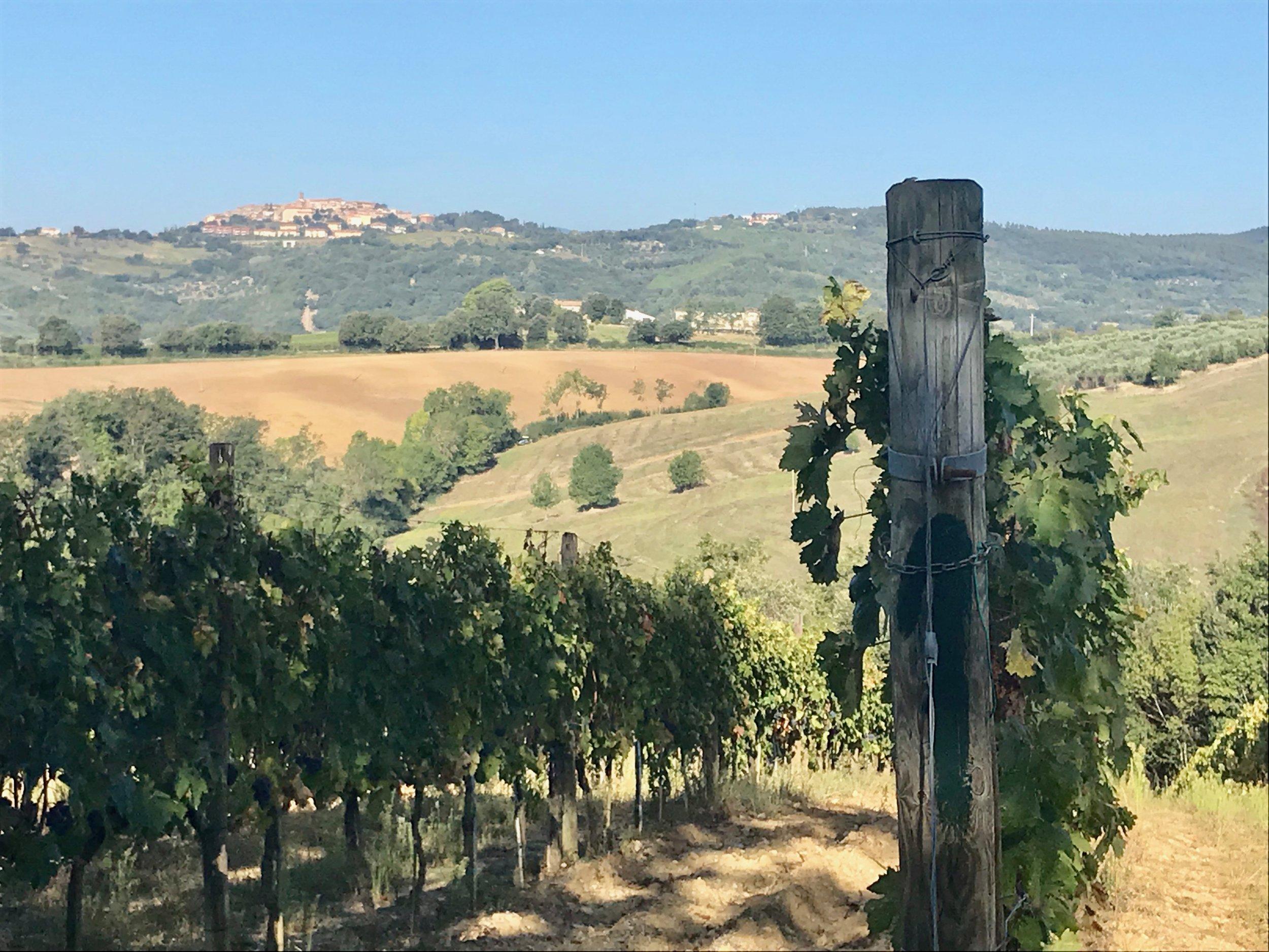 Views from the vineyards of    Poggio al Gello   .