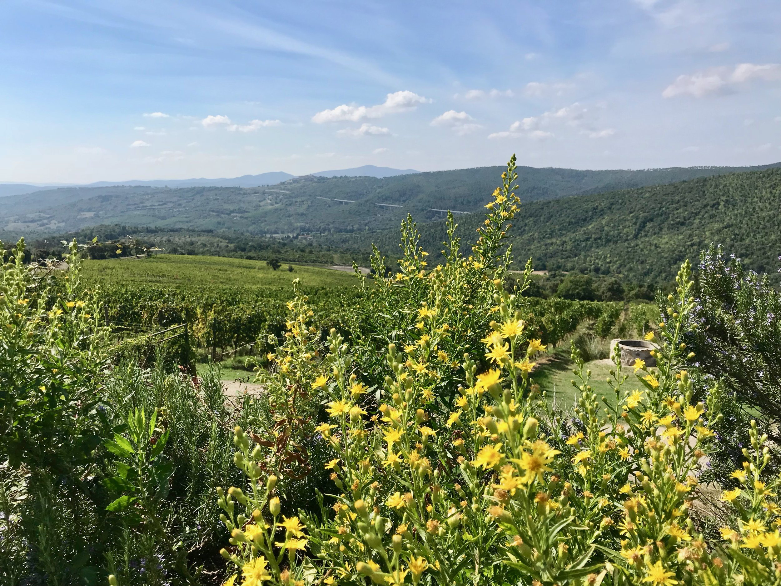 The views from Tenuta L'Impostino. The quality of the Tuscan light is impossible to capture in a photograph.