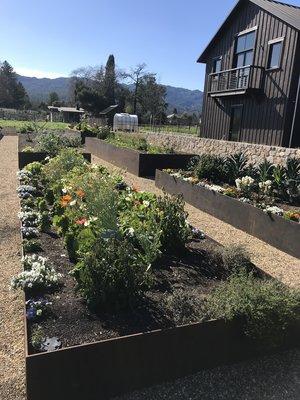 Vegetable and flower gardens