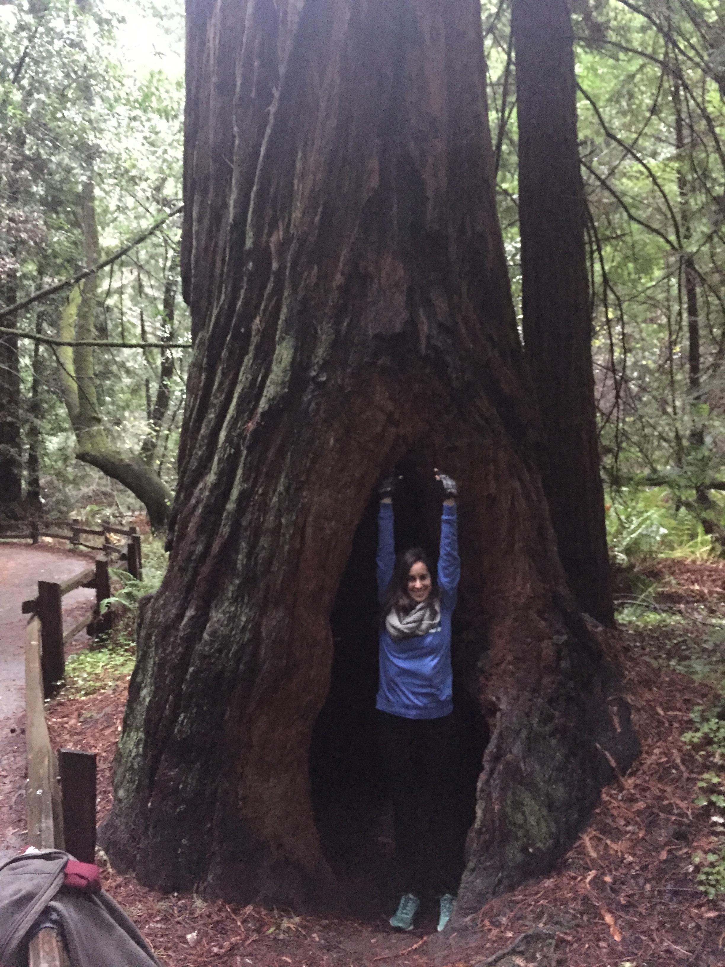 Luli inside a Redwood.