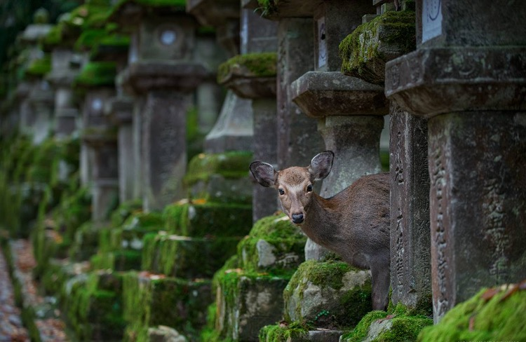photography: Yen Baet / Kasuga Taisha: Nara, Japan