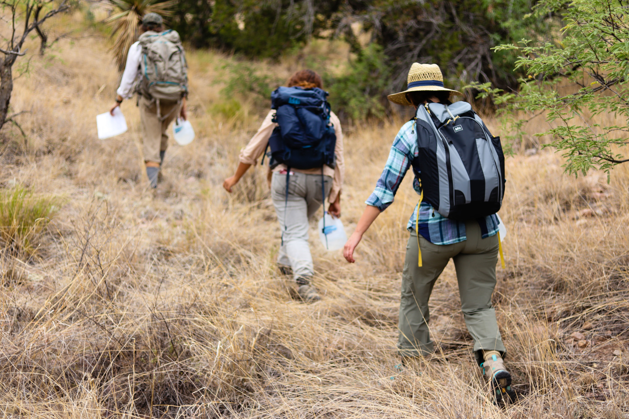 Volunteers hike, each carrying several gallons of water. A gallon of water weighs 8 pounds.