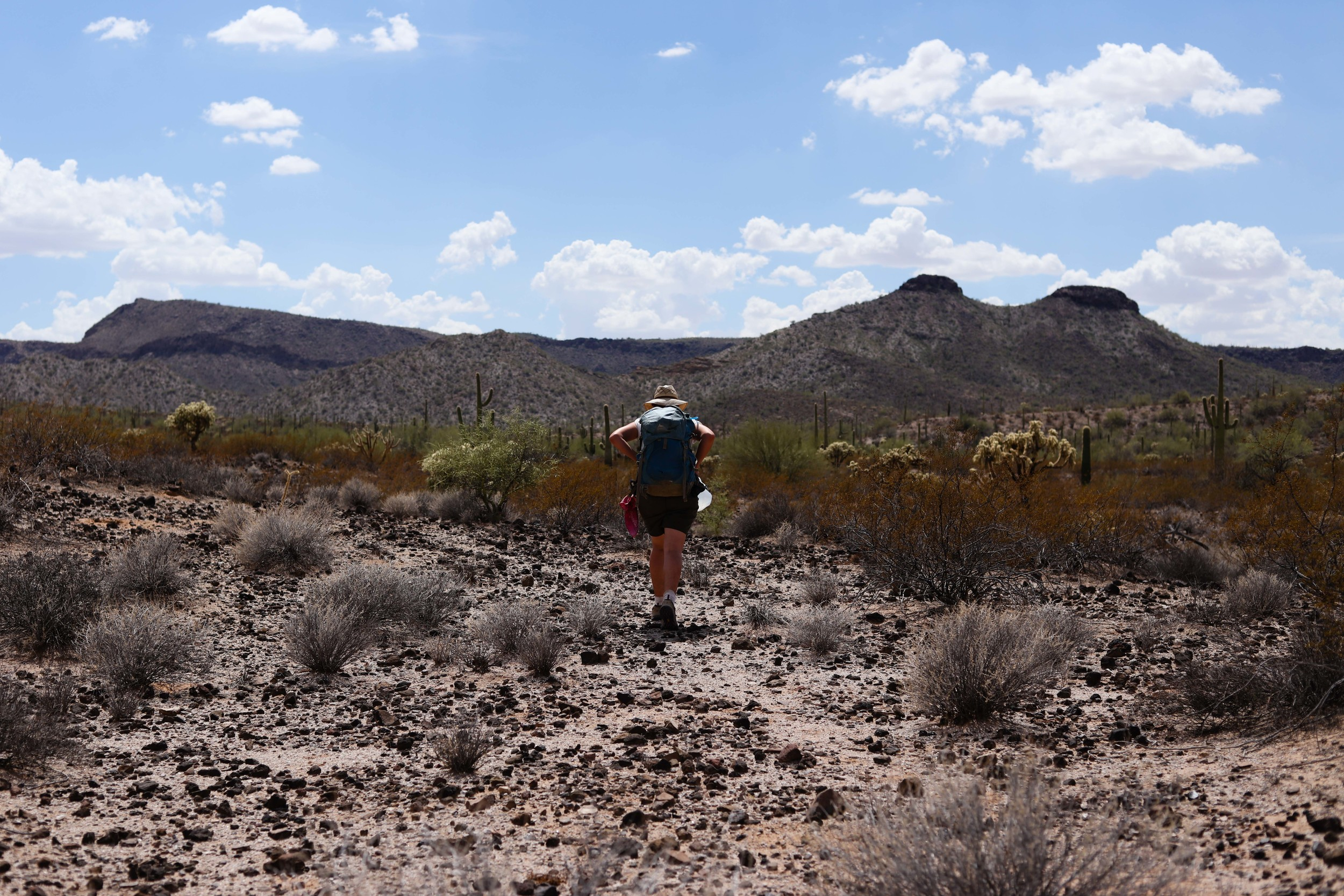The terrain is desolate and otherworldly. The plants are sharp and jagged, there are rocks everywhere, and one must always watch out for rattle snakes, gila monsters, and other dangerous animal life.