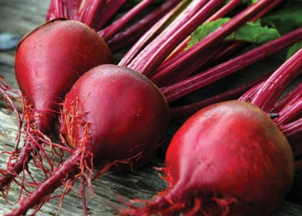 beetroot_red_ace_f1.jpg