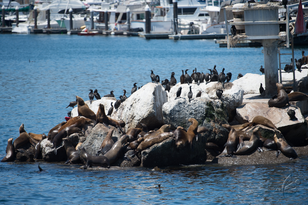 Leaving Monterey Harbor to find some whales
