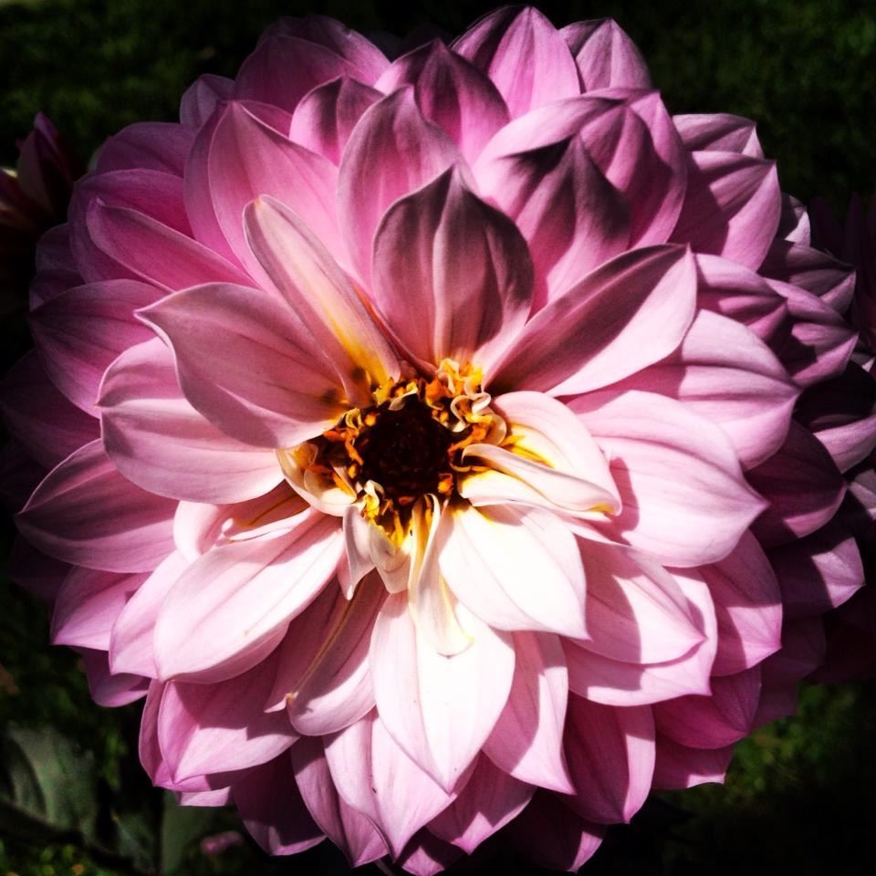 """Spring Flowers"""