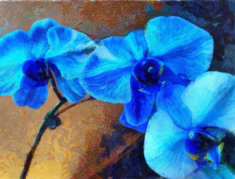 """""""Blue Orchids"""""""