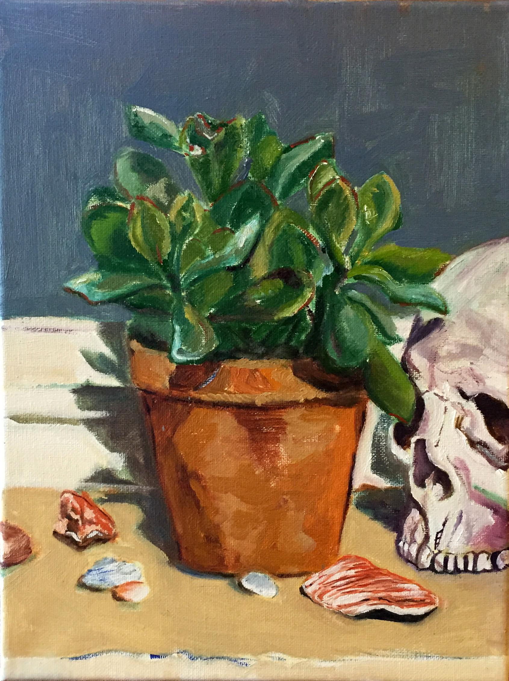 Succulent. Shells. Skull. Stones.  oil on canvas  9X12