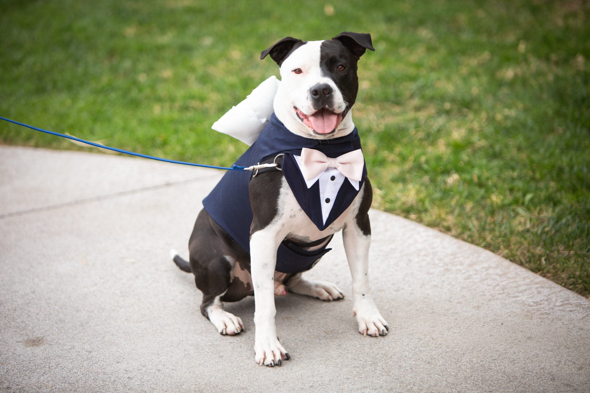 zeke ring bearer.jpg