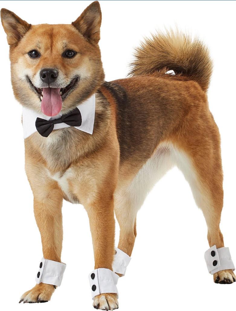 best dog.jpg