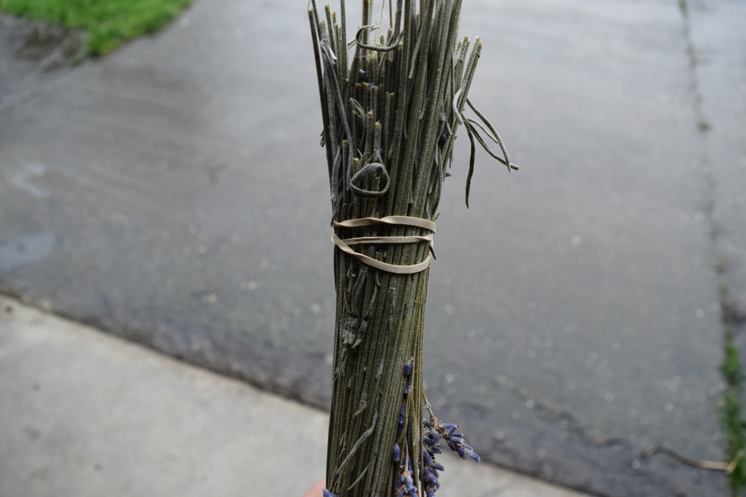 Lavender with rubber band