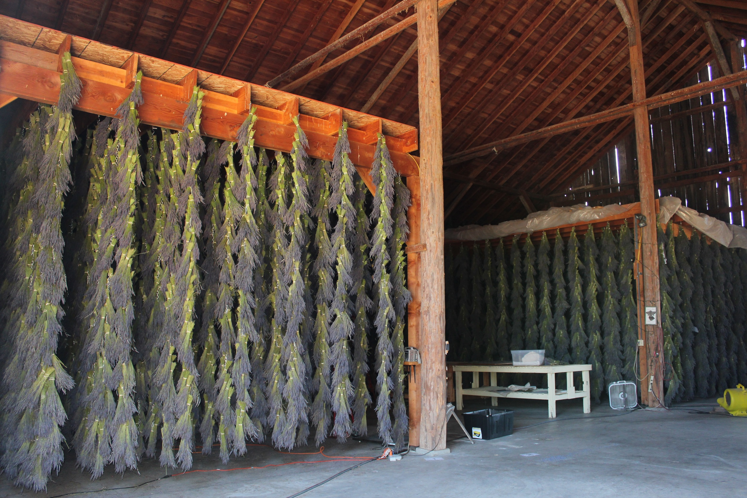 lavender hanging in the bar to dry