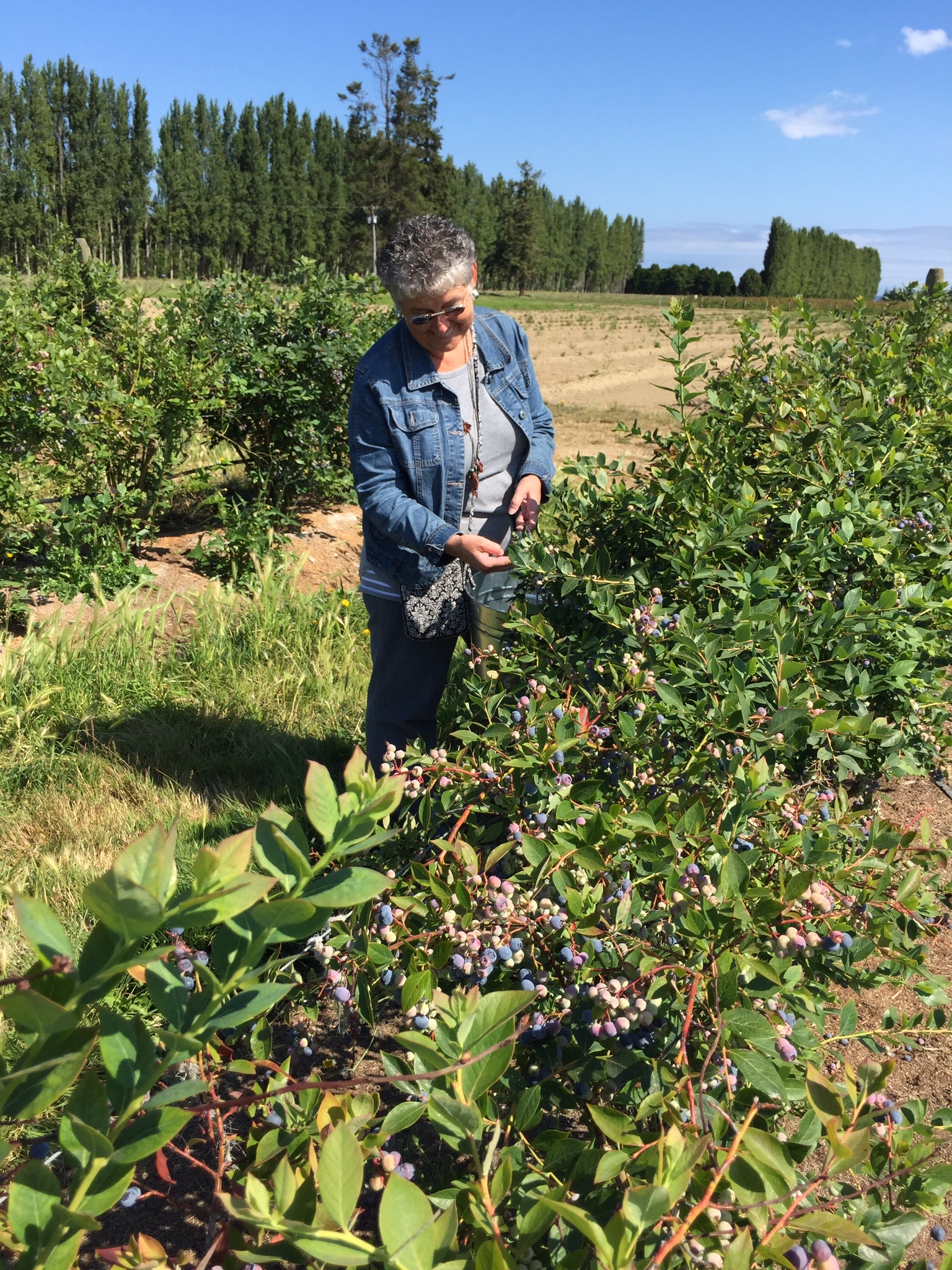 Berry Picking at Graymarsh 1.jpg