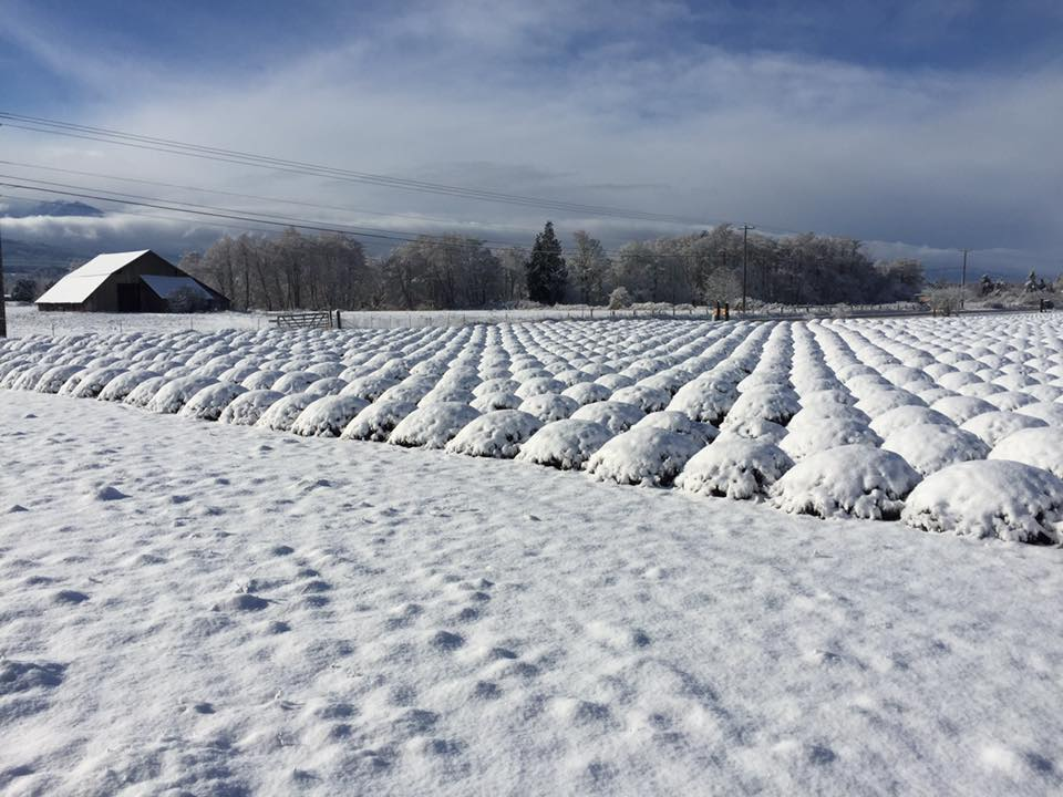 B&B Family Farm Winter.jpg