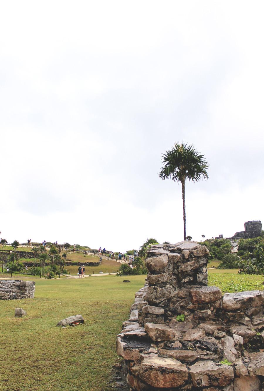 palm tree stones ruins tulum mexico