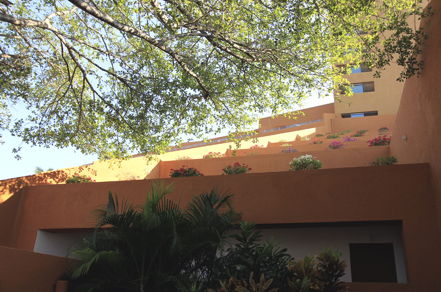 flower landscape mexico ixtapa