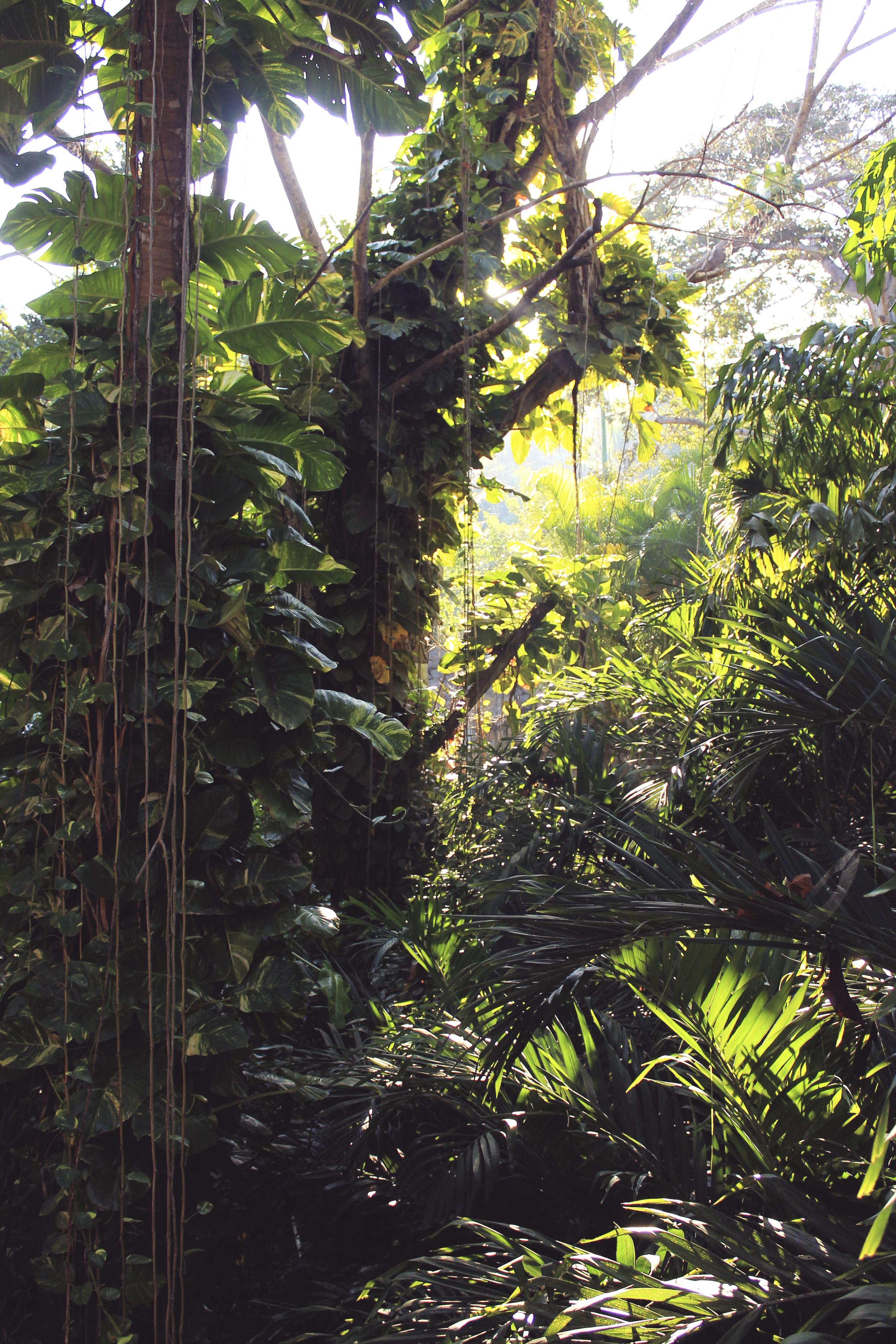 ixtapa resort jungle tropical