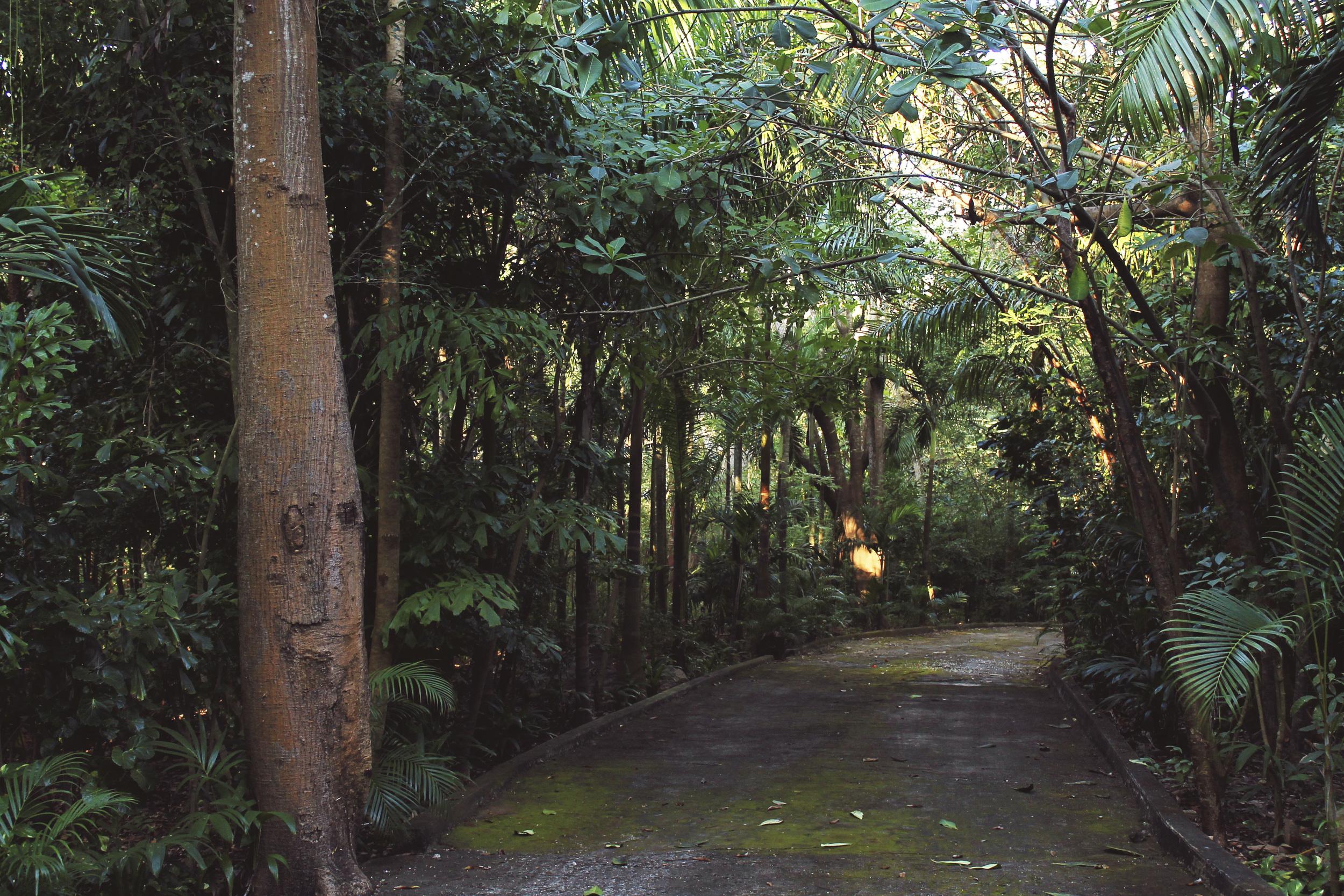 mexico ixtapa jungle road tropical