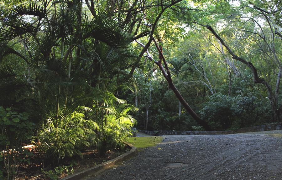 sunspot jungle palm trees mexico