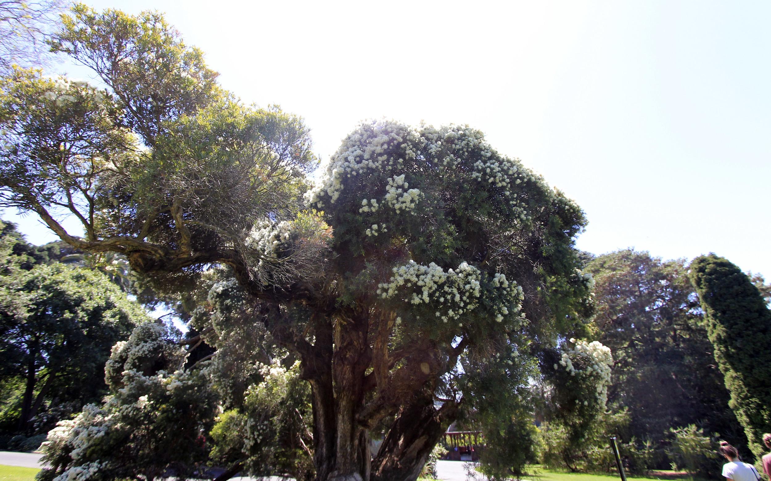 royal-botanic-gardens-melbourne-trees-sun.jpg