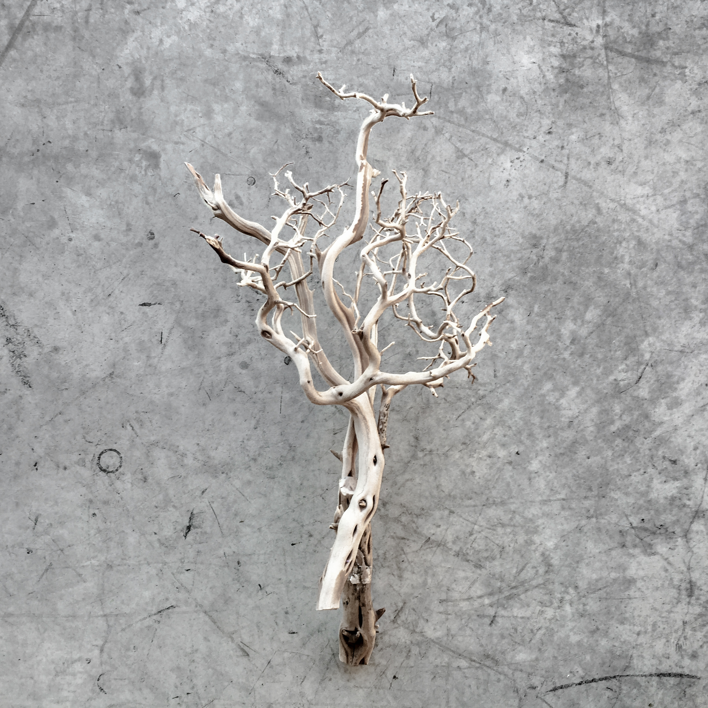 Roots before Branches.