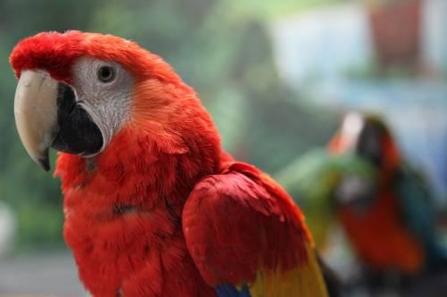 Macaws.jpeg