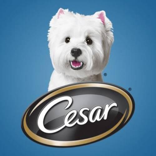 Cesar Logo | Dog Food Nassau County