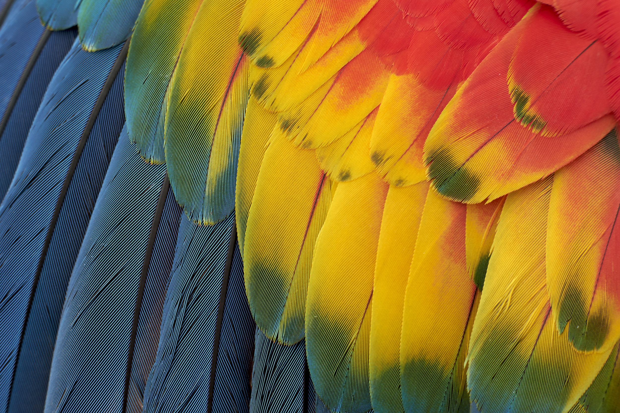 Parrot Feathers - For Birds Only - December 27, 2017.jpg