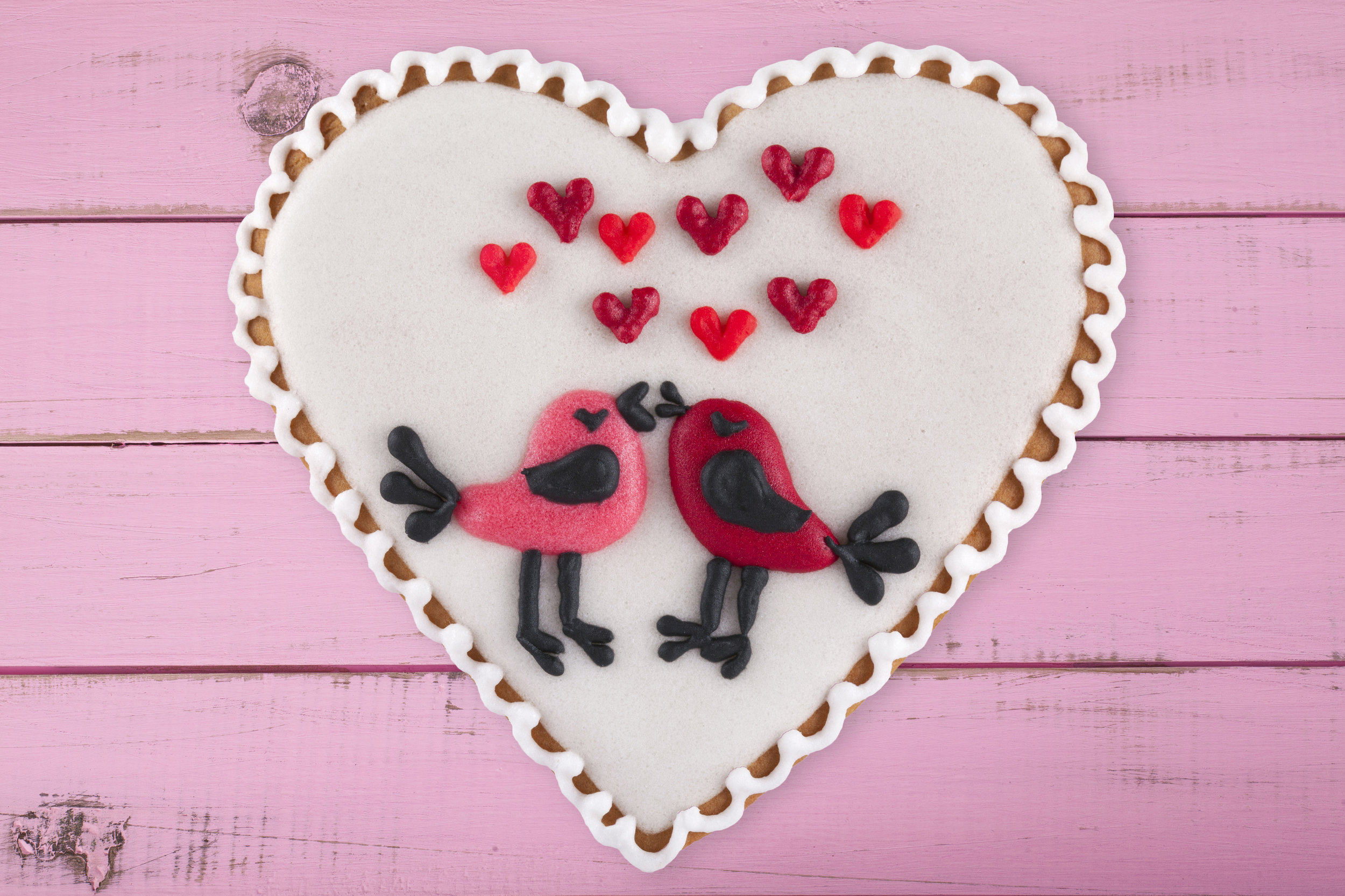 Pink Valentine Birds - For Birds Only - February 13, 2018.jpg