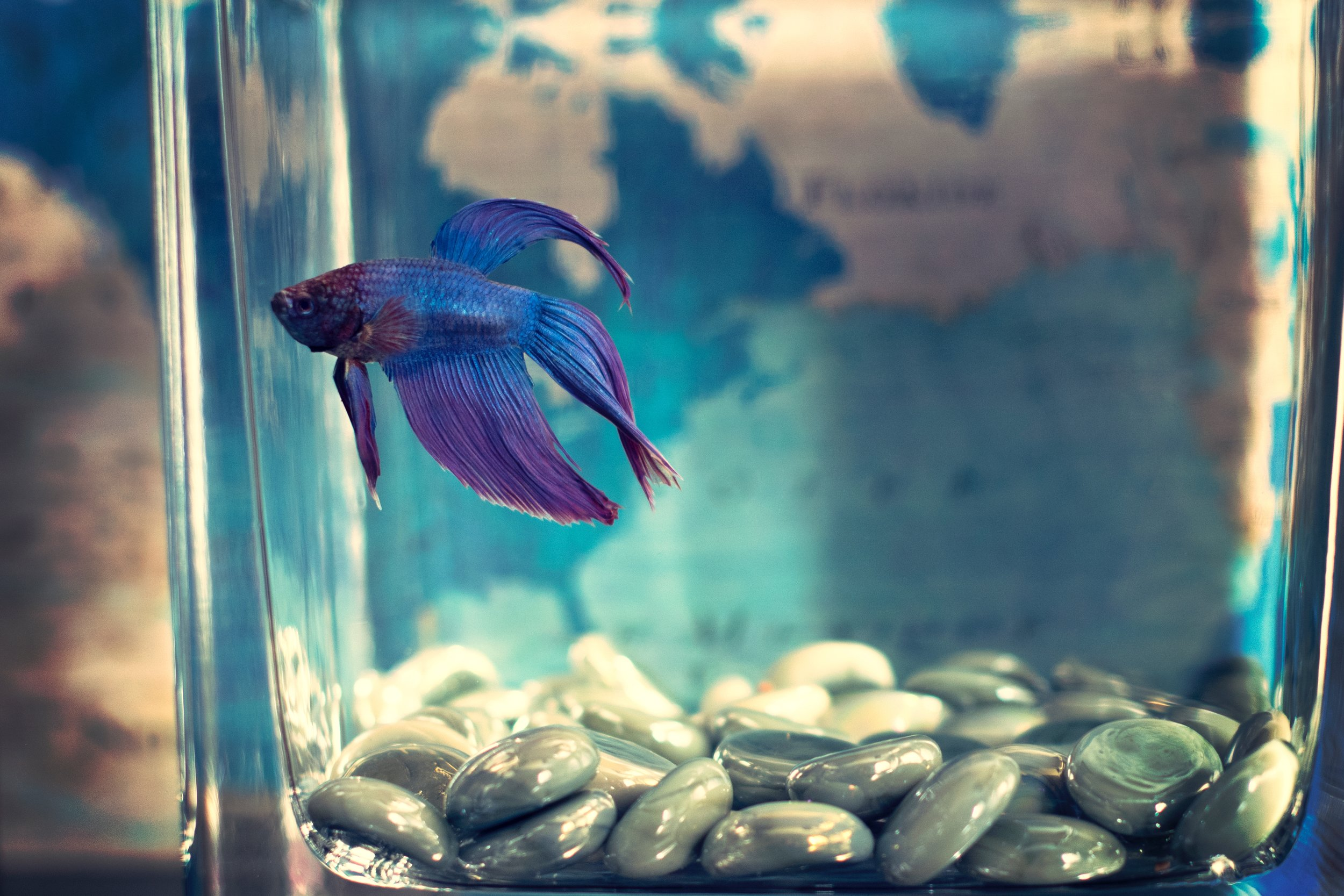 Fish Tank - July 6, 2018.jpg