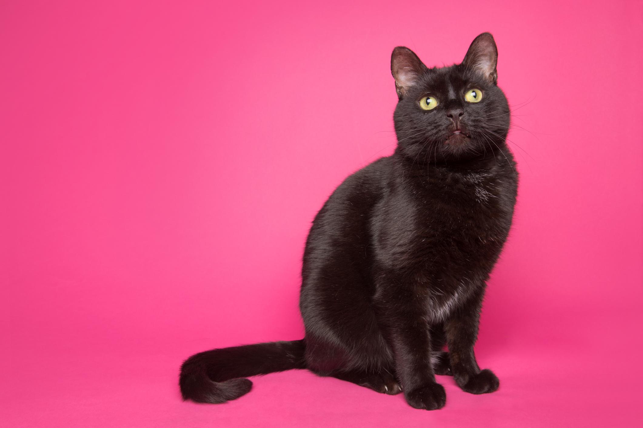 Black Cat - SEPT 26, 2018.jpg
