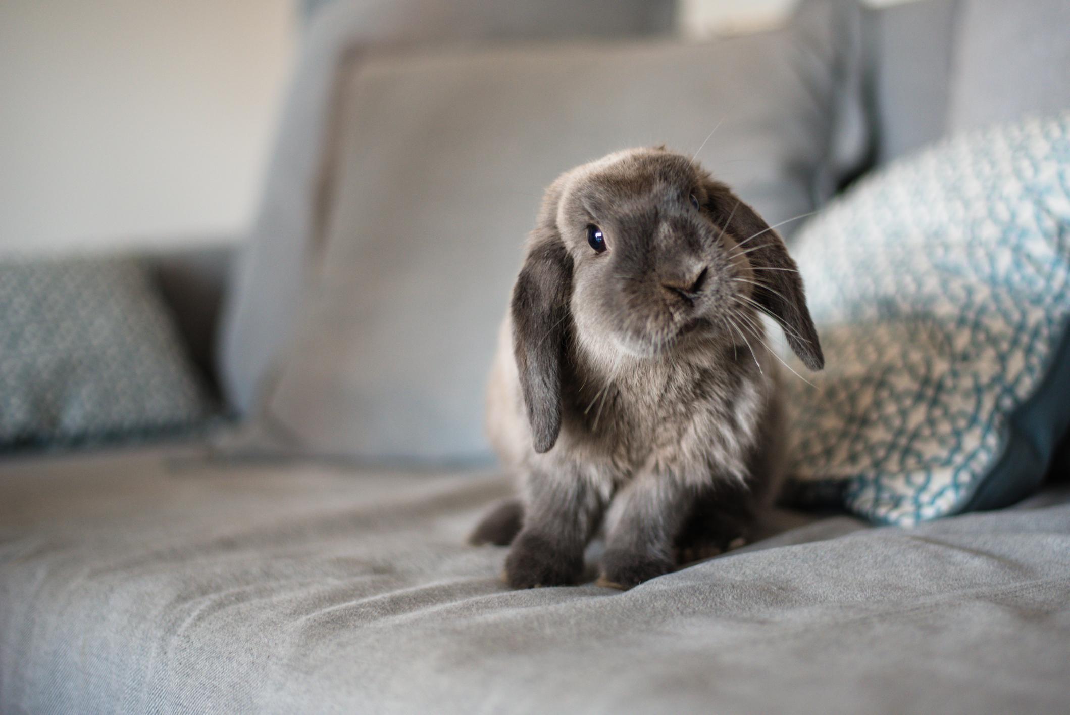 Rabbit - October 3, 2018.jpg