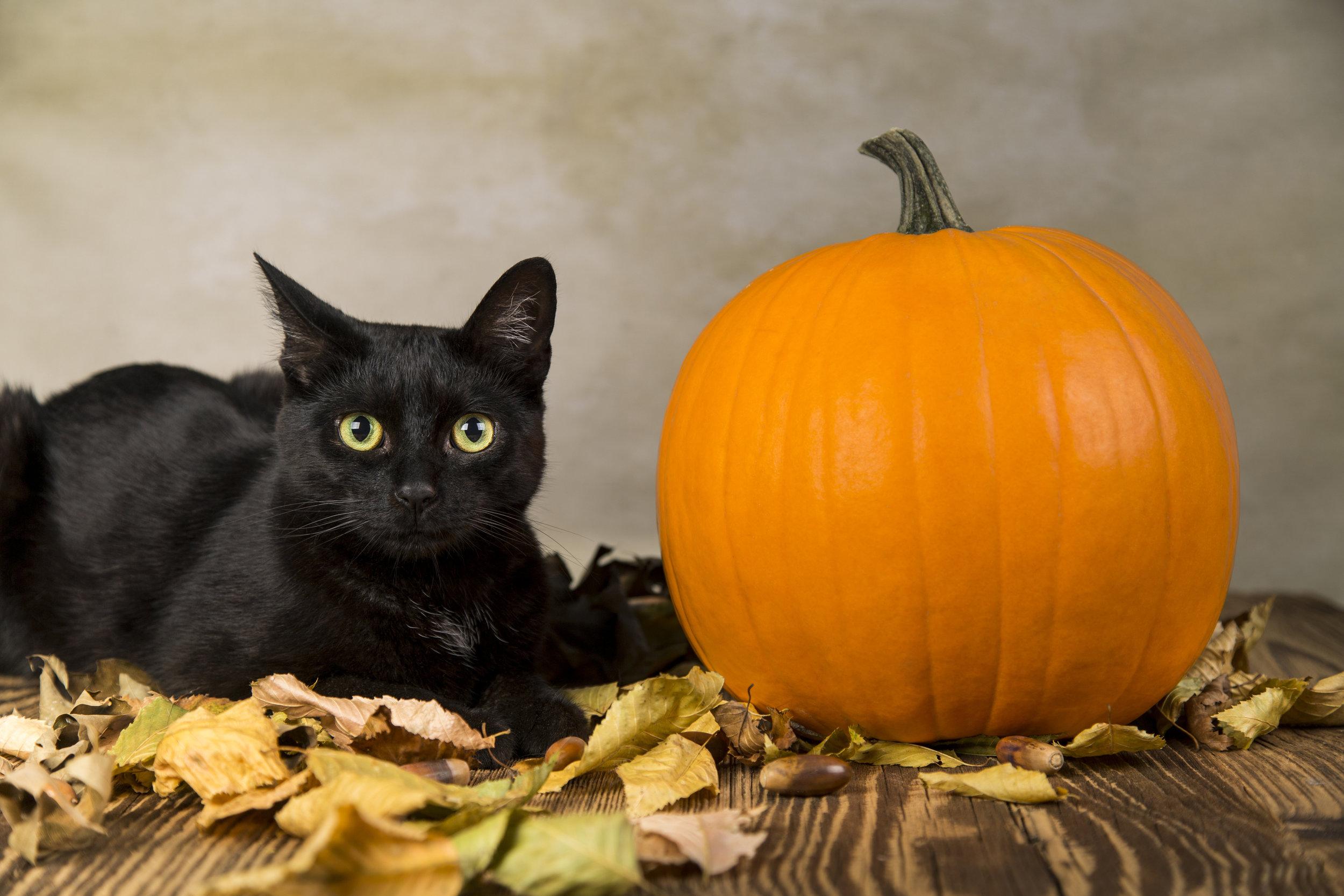 Halloween Cat - OCT 24, 2018.jpg