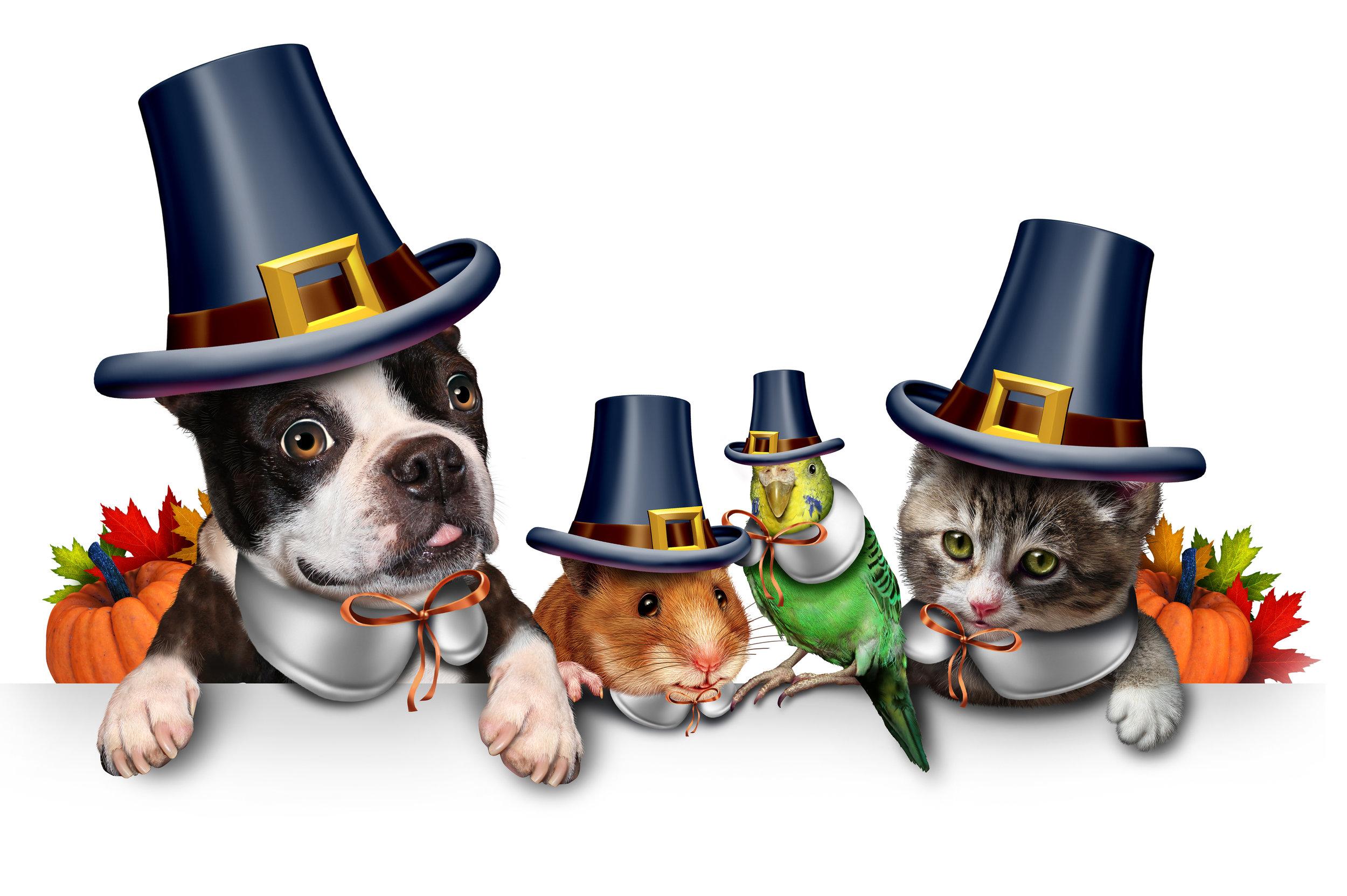 pets on thanksgiving - nov 21, 2018.jpg