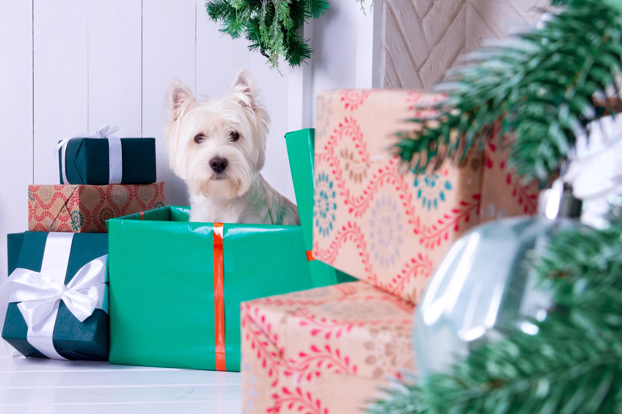 holiday dog - nov 30, 2018.jpg