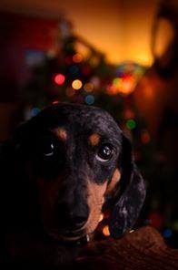 Jasmine McCaulley   jmillphoto.com