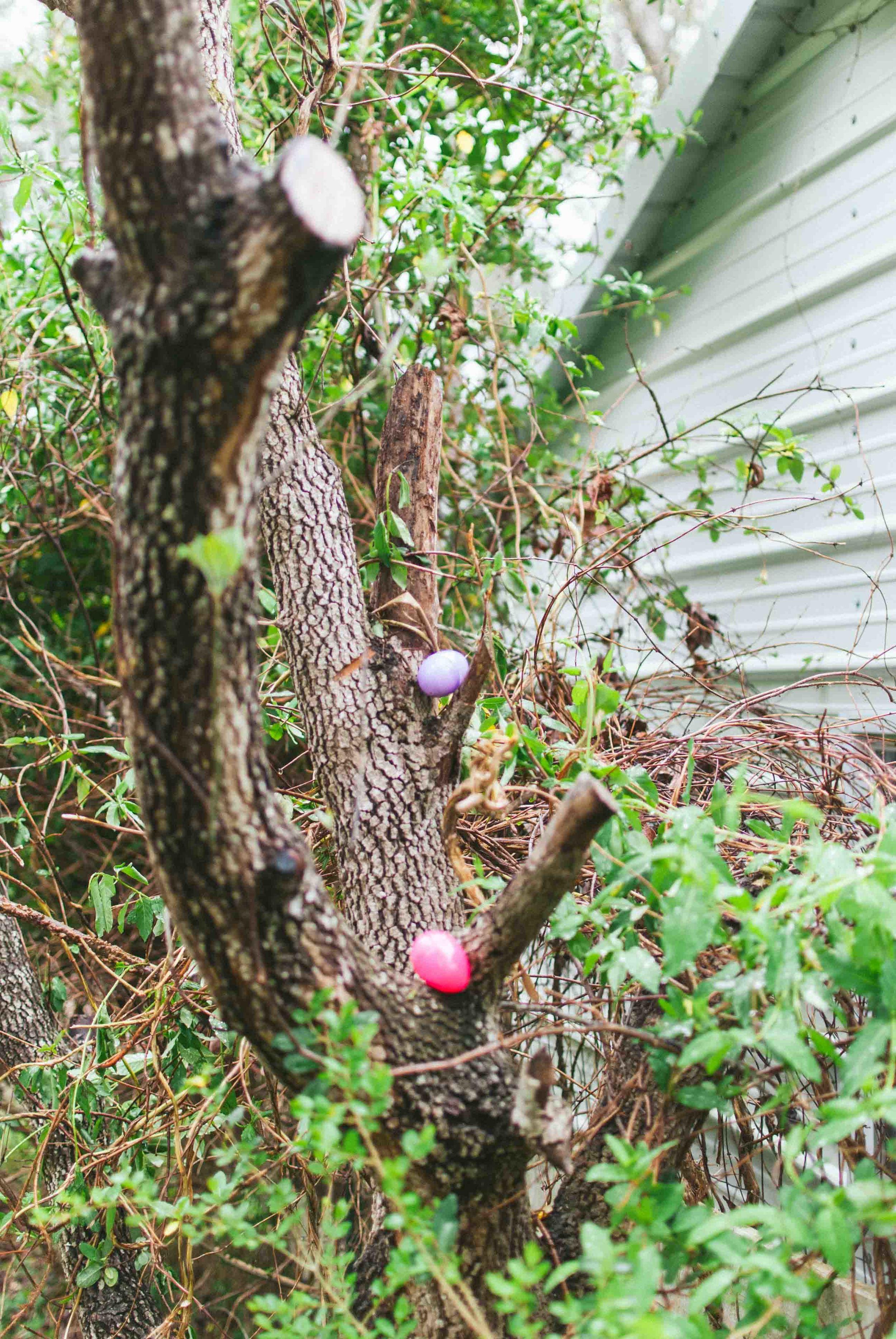 2016.03 Easter-12.jpg