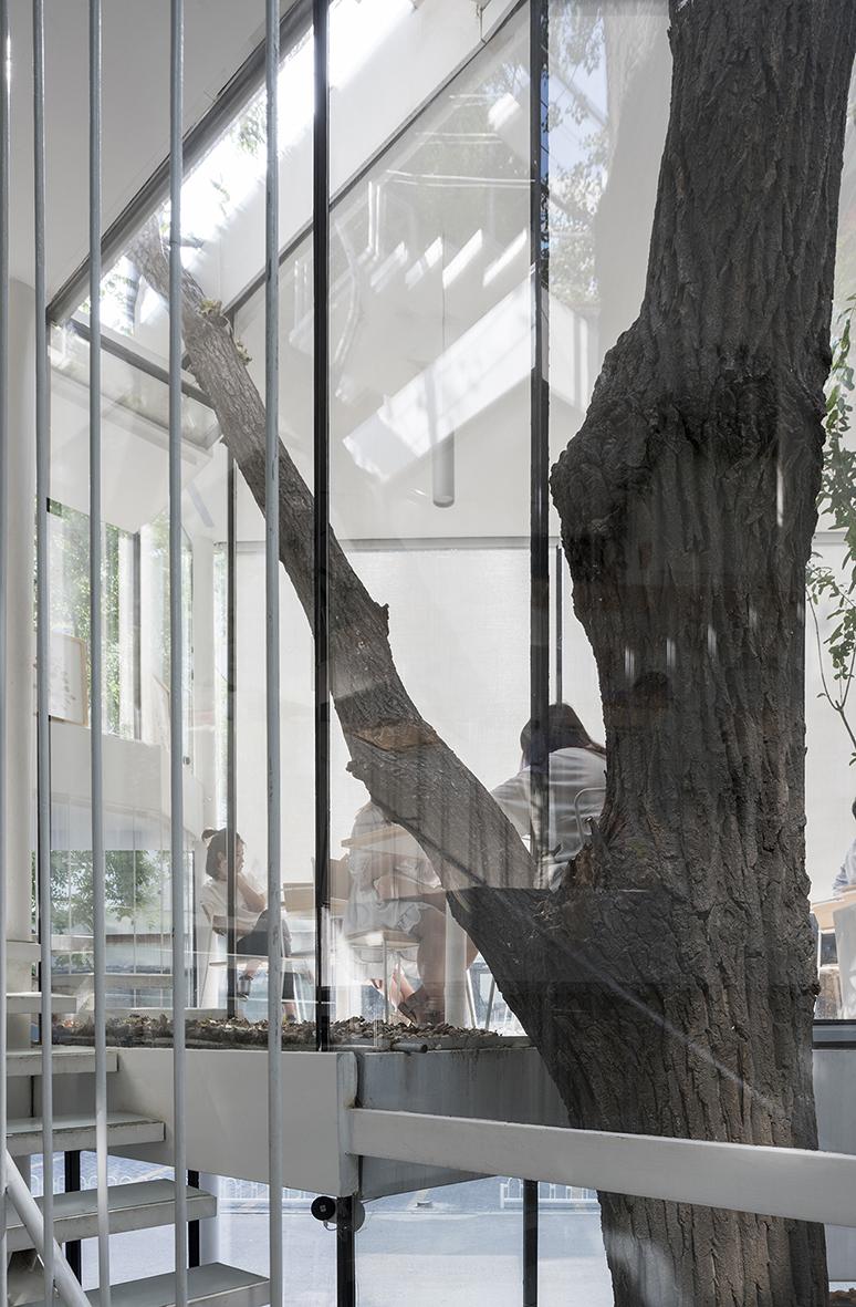 傾斜的樹干穿過不同高度的平臺.jpg