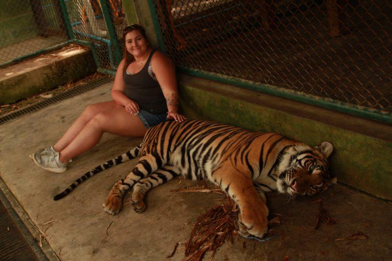 Tiger-Kingdom-Bengel-tigers-near-Phuket-Thailand-5-768x512.jpg